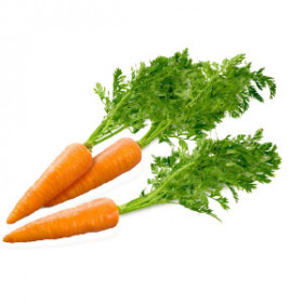 export and import egyptian Carrots
