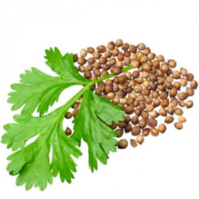export and import egyptian Coriander