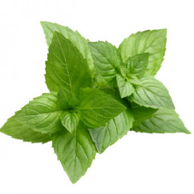 Egyptian Peppermint