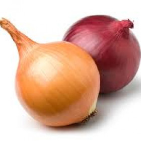 export and import egyptian onions