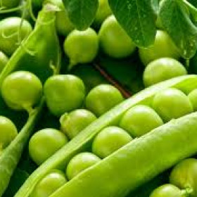 Egyptian Green Peas