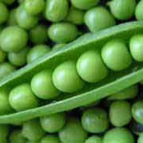 export and import egyptian Green peas