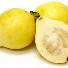 Egyptian Guava